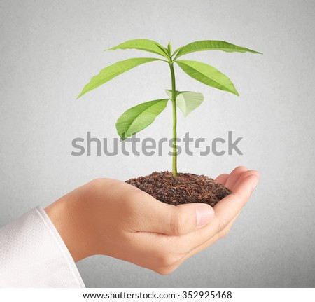 holding green plant in a hand