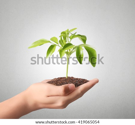 holding green plant in a hand - stock photo