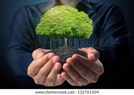 holding green tree in hand - stock photo