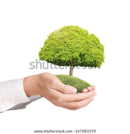 holding green tree in the hand  - stock photo