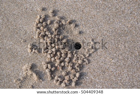 hole Ghost crab