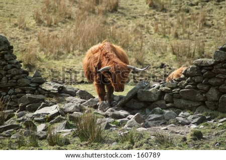 Hole in the wall highland - stock photo