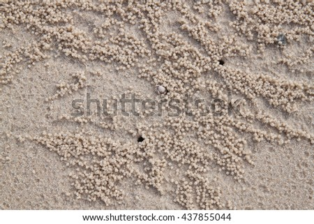 hole of the little crabs on the sand floor - stock photo