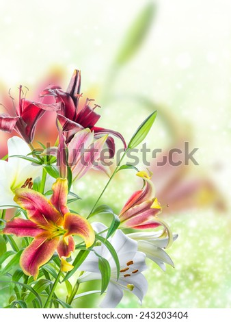 Holiday background with lovely flowers