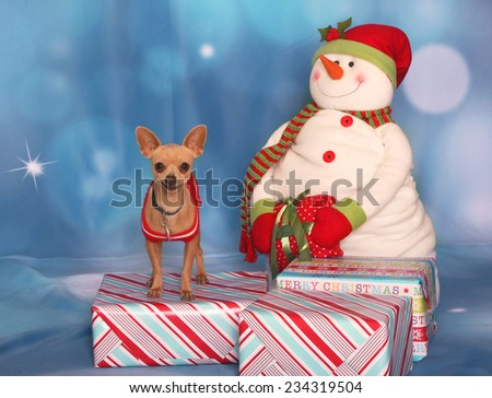 Holiday Chihuahua with a snowman - stock photo