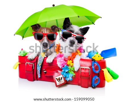 holiday dogs on a red bag dressed as tourists - stock photo