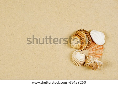 Holiday's memory - several shells on gold sand - stock photo