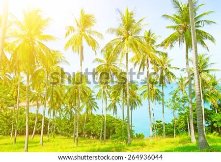 Holidays background.  Beautiful beach with palm tree - stock photo