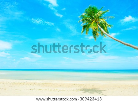 Holidays Background. Beautiful beach with palm tree over the sand