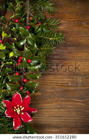 holly and flower of star of Bethlehem on wooden table - stock photo