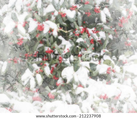 Holly berries and snow Christmas theme background with white frosty edges