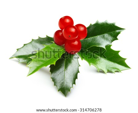Holly berry leaves Christmas decoration isolated on white background - stock photo