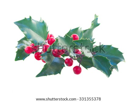 Holly branch with red berries isolated on white background - stock photo