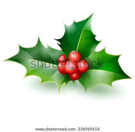 Holly. Christmas Holly Berry. - stock photo