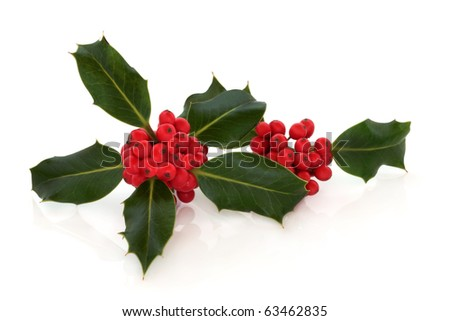 Holly leaf sprigs with red berries, isolated over white background with reflection. - stock photo
