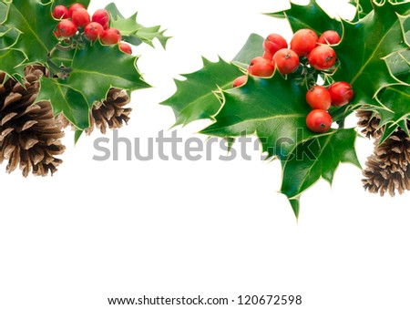Holly Sprigs on white with pine cones - stock photo