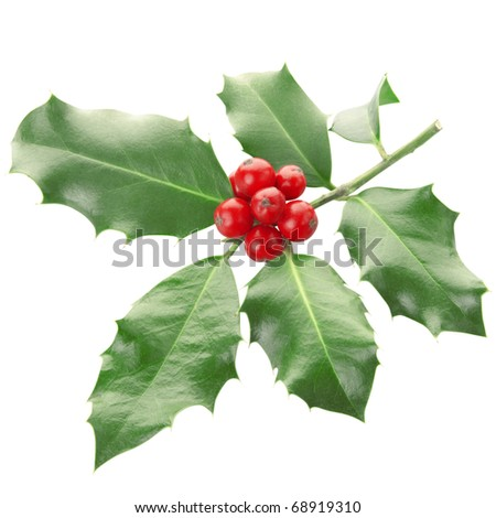 Holly twig isolated on white, clipping path included - stock photo