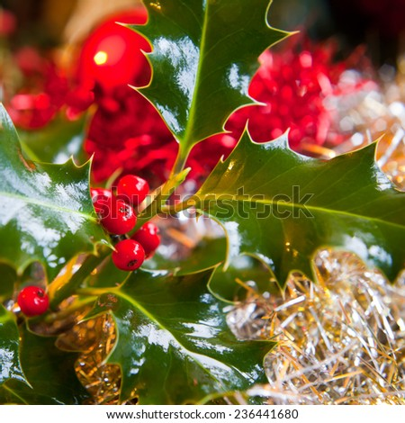 Holly twig with fruits. Christmas decoration. Typical, traditional decoration bush. MAcro perspective, background, nobody. Christmas preparation, Christmas eve, boxing day - stock photo