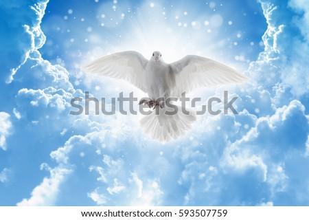 Holy Spirit Bird Flies Skies Bright Stock Photo Royalty Free