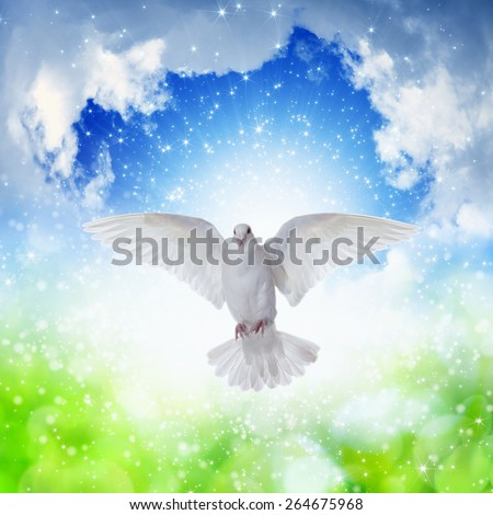 Holy spirit dove flies in blue sky, bright light shines from heaven, gospel story - stock photo