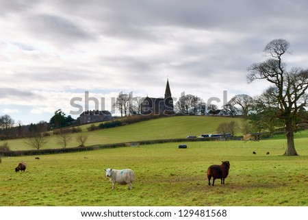 Holy Trinity Church Bardsea with fields and sheep.