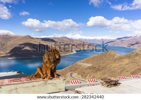 Holy Yamdrok lake in Tibet with Tibetan Mastiff - stock photo