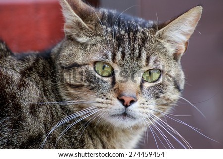 Home cat portrait close up in outdoors - stock photo