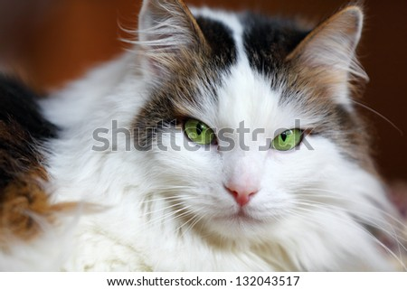 home cat with green eyes