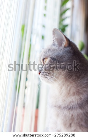home cute striped cat at the window - stock photo