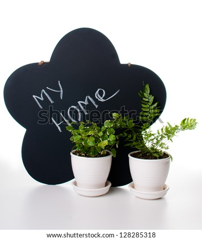 Home decor, potted plants and a chalk board close up, isolated