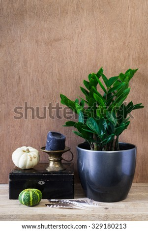 Home decoration set with zamioculcas plant and two pumpkins