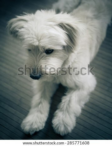 Home dog portrait - stock photo