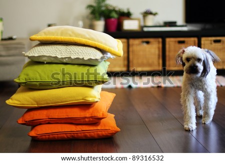 home environment. Colorful pillows and dog. Soft focus. - stock photo