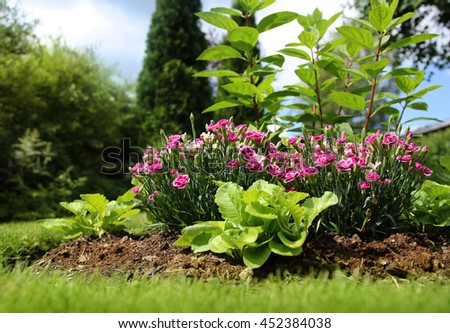 Home garden peaceful summer feeling ground level view - stock photo