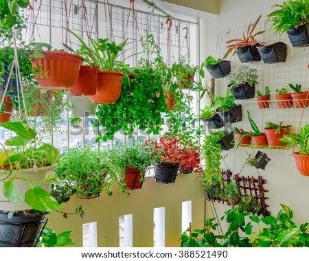 Home grown flowers and herbs in the hanging pots at balcony at Ang Mo Kio area. Growing a garden in a sharing apartments balcony/corridor is popular in Singapore. Urban farm concept. Panoramic style. - stock photo