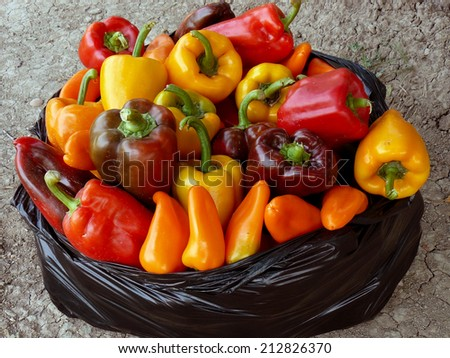 home grown sweet peppers in plastic bag - stock photo