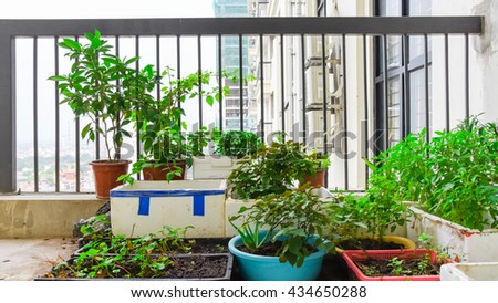 Home grown vegetable in the styrofoam boxes over balcony of apartment building in Hanoi. Great for agriculture publication. Growing trees in apartments balcony container is popular in Vietnam.Panorama
