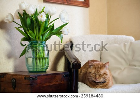 Home interior, cat sleeping in an armchair, a wall and a bouquet of white tulips - stock photo