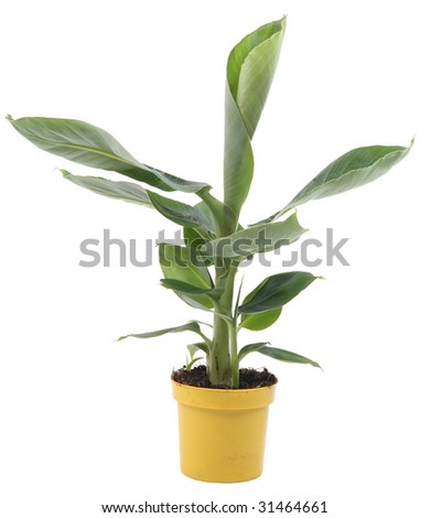 home plant in yellow flowerpot