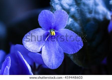violet flower stock images, royaltyfree images  vectors, Beautiful flower