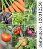 Homegrown garden product collage - stock photo
