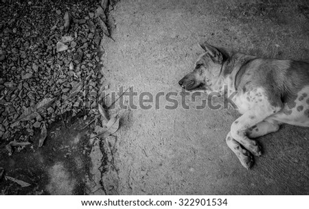 Homeless abandoned dog sleeping on the street - Black & White - stock photo
