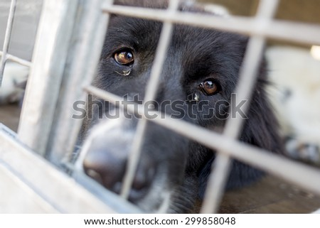 Homeless and ownerless sad dogs are kept in cages. - stock photo