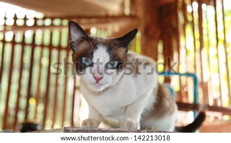 homeless cat - stock photo