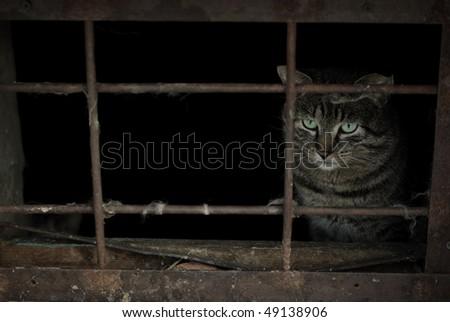 homeless cat - stock photo