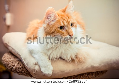 Homeless cat at the shelter - stock photo