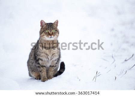 Homeless cat freezing outdoors in winter - stock photo