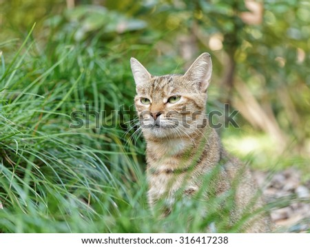 Homeless cat hide in grass, looking forward.