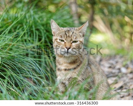 Homeless cat hide in grass with eyes half closed.