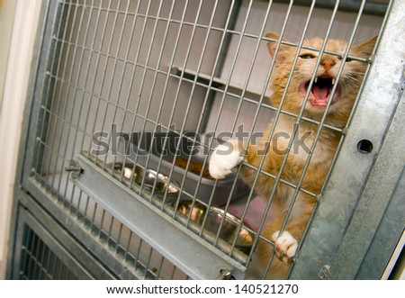 Homeless cat in a cage in an animal shelter - stock photo